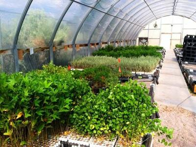 Check out the state seedling sale