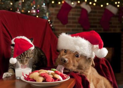 Table manners: Holiday food that is a yes or no for pets