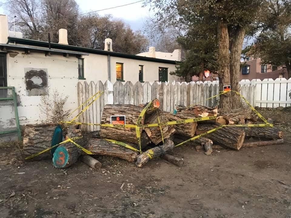 Taos Plaza cottonwood to find new life as bench, drums, art