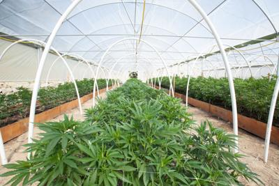 Cannabis land use regs come into focus