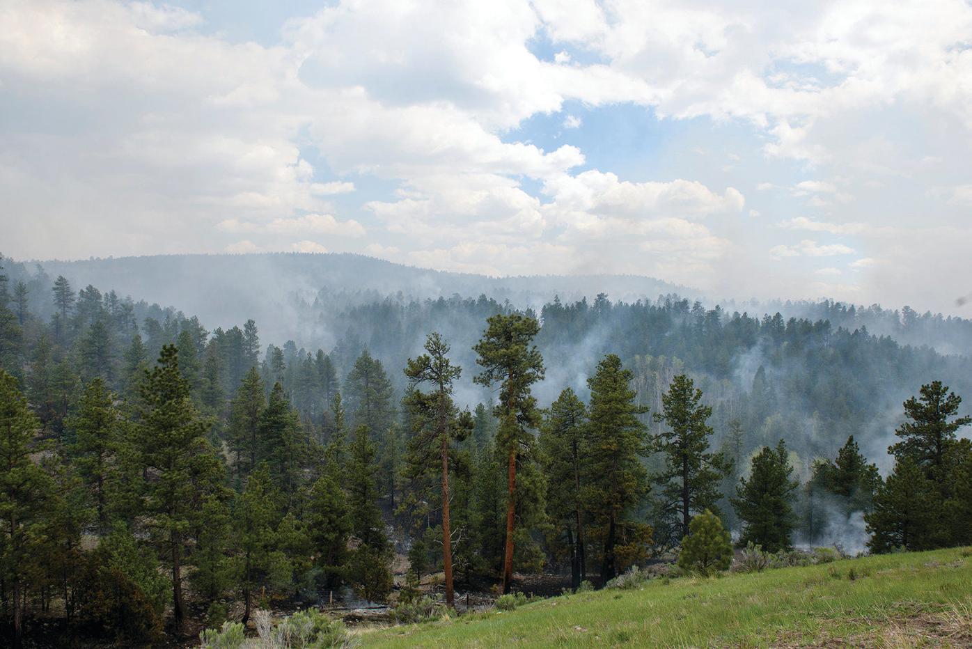 Carson National Forest postpones prescribed burns