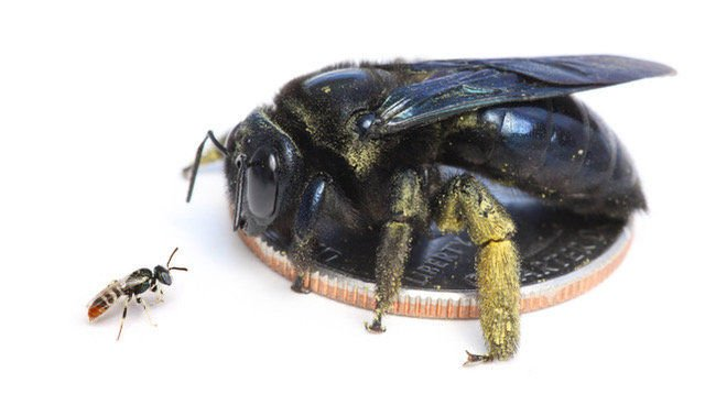 Learn about the bzzzzz from a New Mexico melittologist