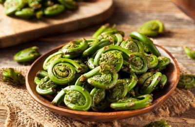 What Is a Fiddlehead?