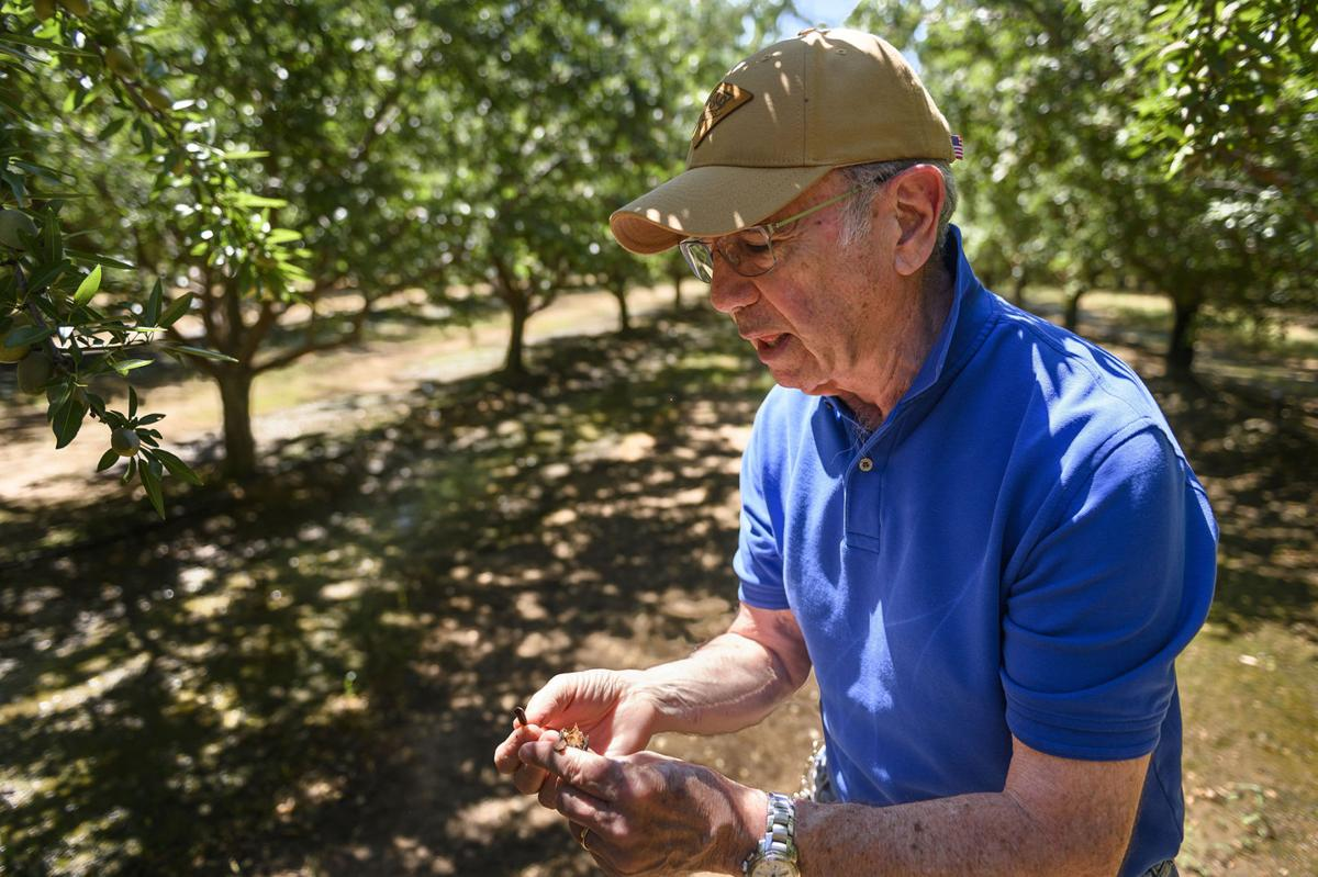 John Monroe Sr., an almond farmer, breaks open and displays an almond shell at his almond farm in Arbuckle on Wednesday, June 26, 2019.