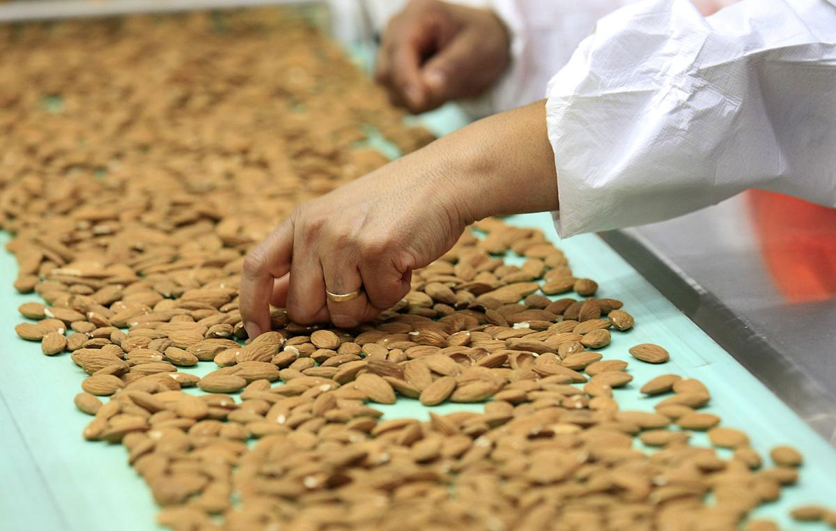 A worker hand sorts almonds, pulling off defective ones, after the nuts have passed through laser sorters at a processing plant in Lost Hills, Calif.