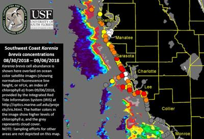 High Concentrations Of Red Tide Found At Clearwater Pass Pinellas