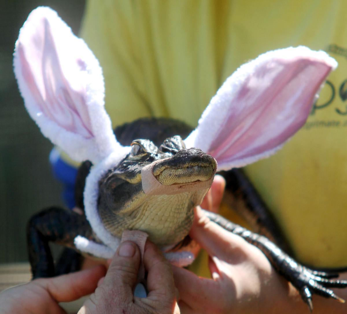 Suncoast Primate Sanctuary's Easter Egg Hunt