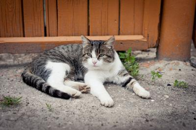 Pinellas County asks residents for feedback on proposed feral cat program