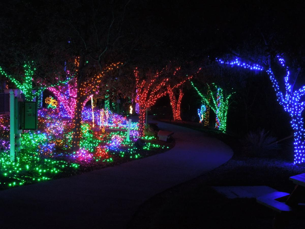 Florida botanical gardens all aglow with holiday lights - Largo botanical gardens christmas lights ...