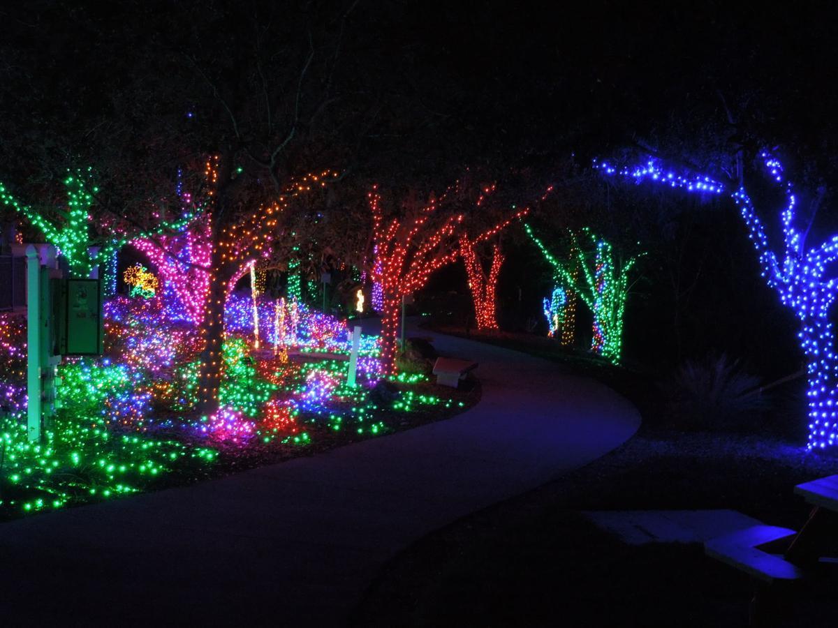 Florida botanical gardens all aglow with holiday lights - Florida botanical gardens christmas lights ...