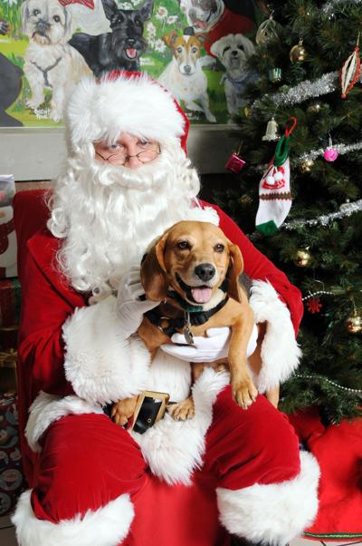 Animal Services to host Santa pictures