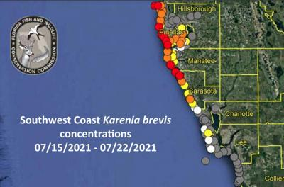 Red tide conditions remain grim along Pinellas County's beaches
