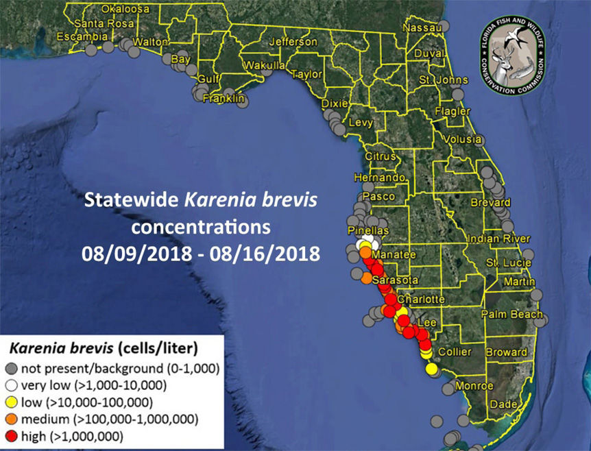 Red Tide Creeps North Still No Bloom In Pinellas Pinellas County