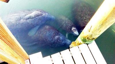Redington Shores to seek no-wake zone for cove