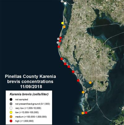 Red Tide Shows No Signs Of Leaving Pinellas County Pinellas County