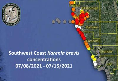Red tide levels remain high in around Pinellas County