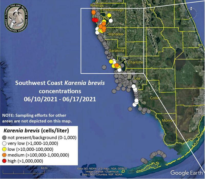 Pinellas continues red tide cleanup on local waterways