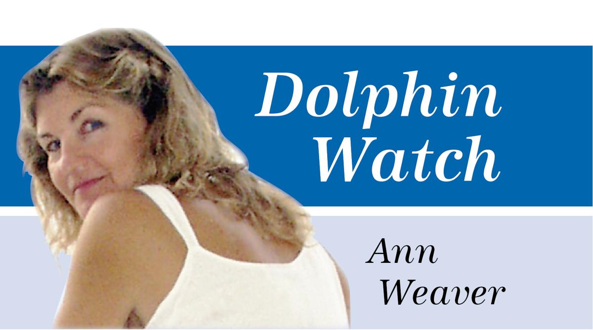 Dolphin Watch Sig