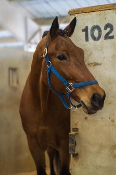 Horses for Handicapped raising funds after loss of horse