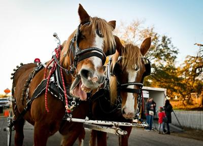 Local and out of town shoppers take part in Salado Christmas