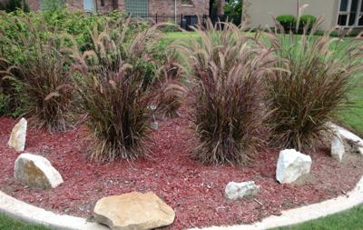 Ornamental Grasses Are Easy To Grow And Easy To Maintain Life