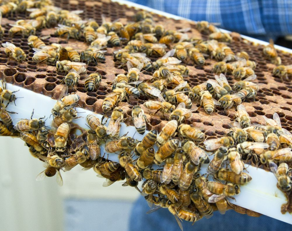 Honeycomb Commercial Pollination Business