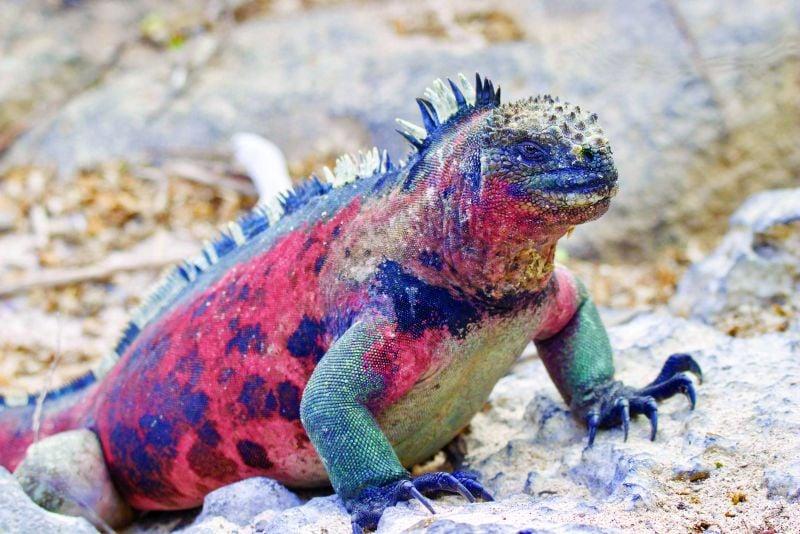 Exploring the Galapagos