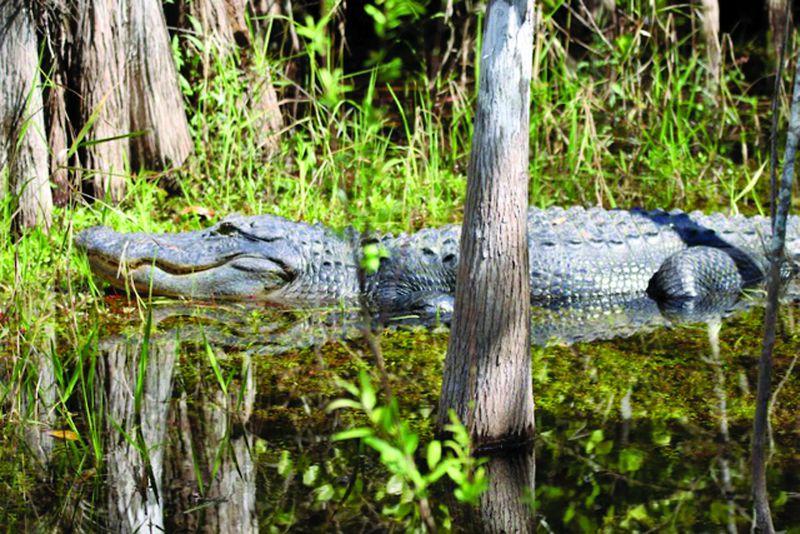 Images - Everglades adventure bang bus
