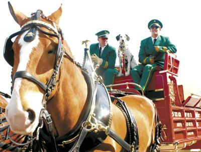 Clydesdales parade planned in Temple on Thursday