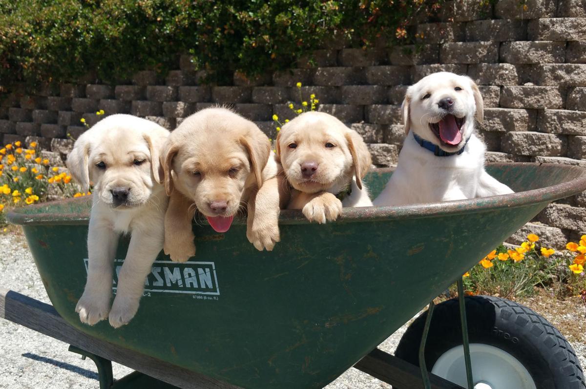 puppies 1.jpg