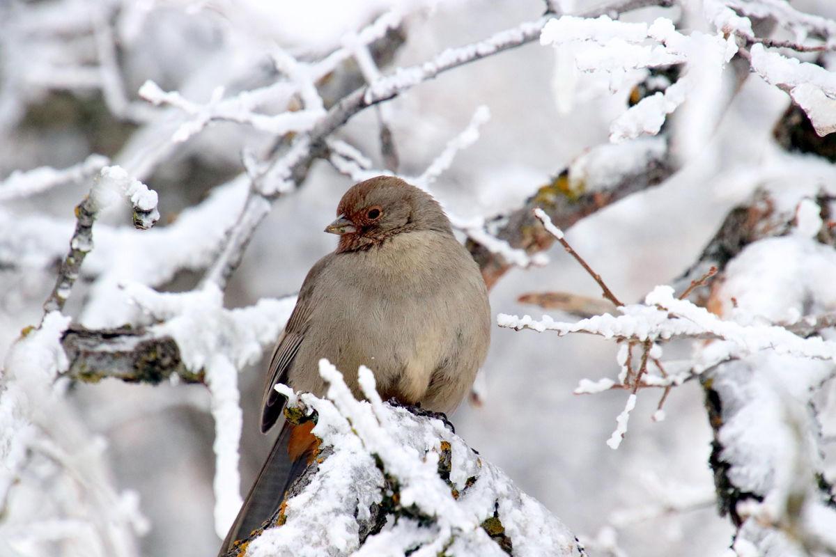 Pen in Hand #1555 - Birds in Snow 1.jpg