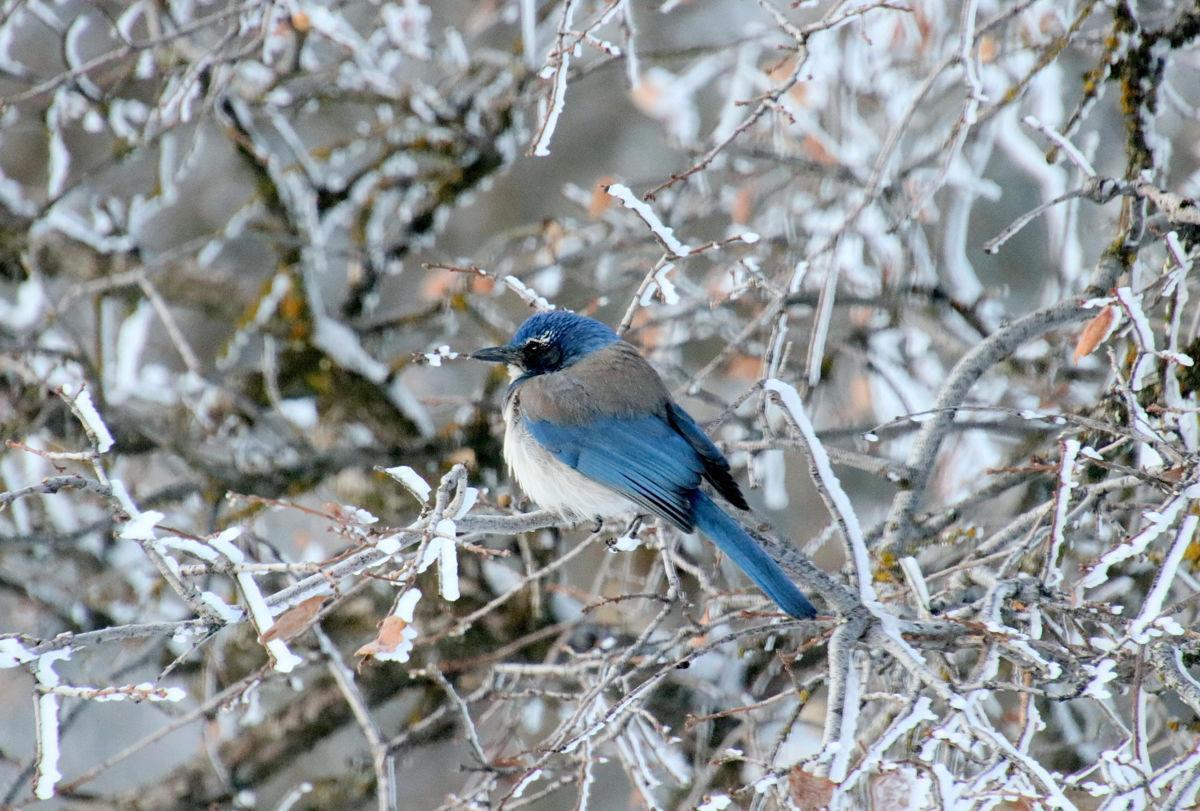 Pen in Hand #1555 - Birds in Snow 5.jpg