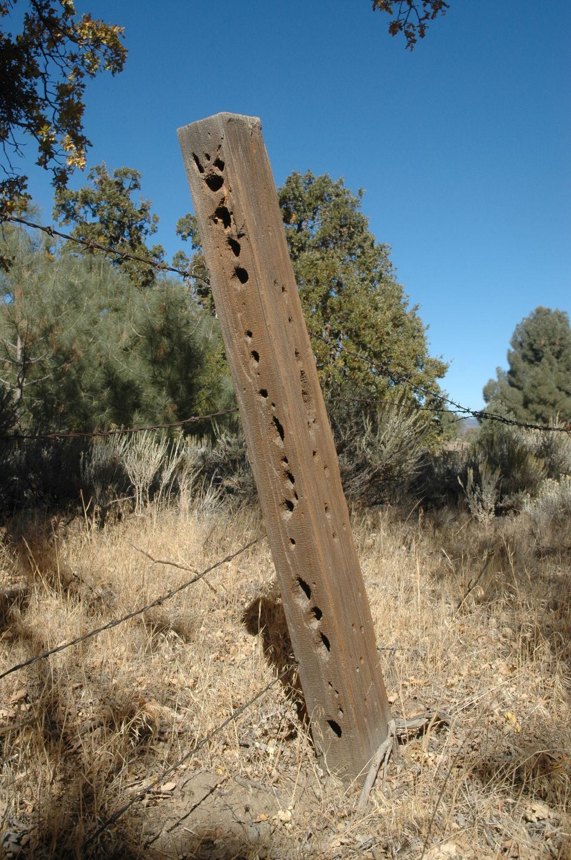 Pen in Hand #1562 - Barbed Wire 1.JPG