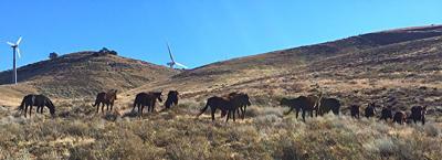 Natural Sightings #642 - Oak Creek Wild Horses.JPG