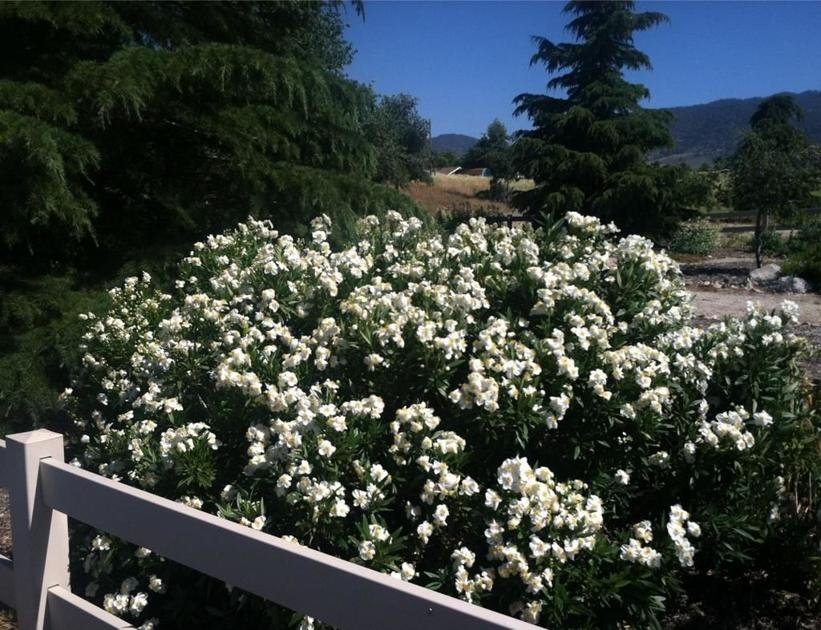 TRCD spring plant sale set