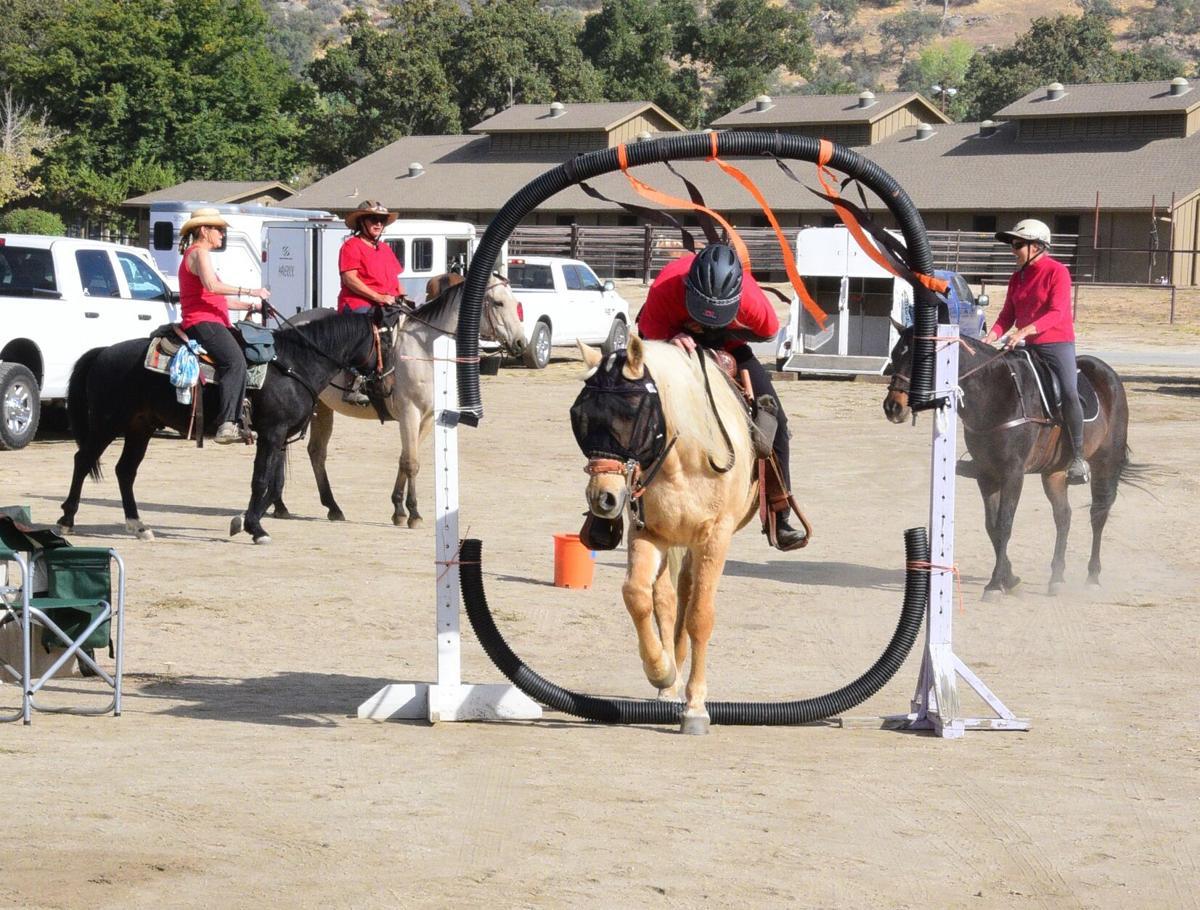 Horse SMIRNOFF (6).JPG