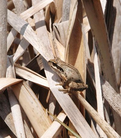 Natural Sightings frog