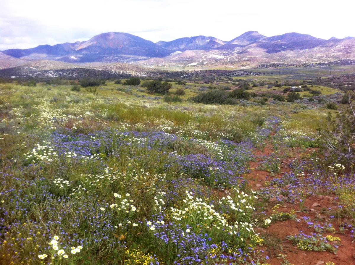 Wildflowers at Tomo Kahni 1