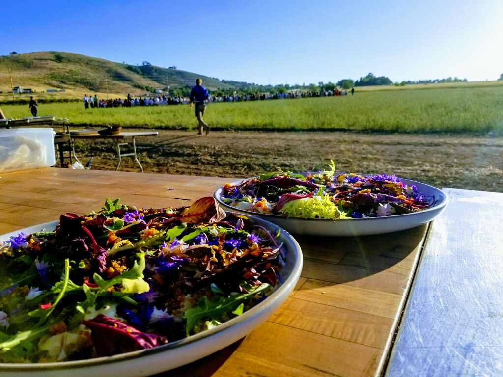 Pen in Hand #1505 – LA Food Bowl event at Weiser Family Farms 1.JPG