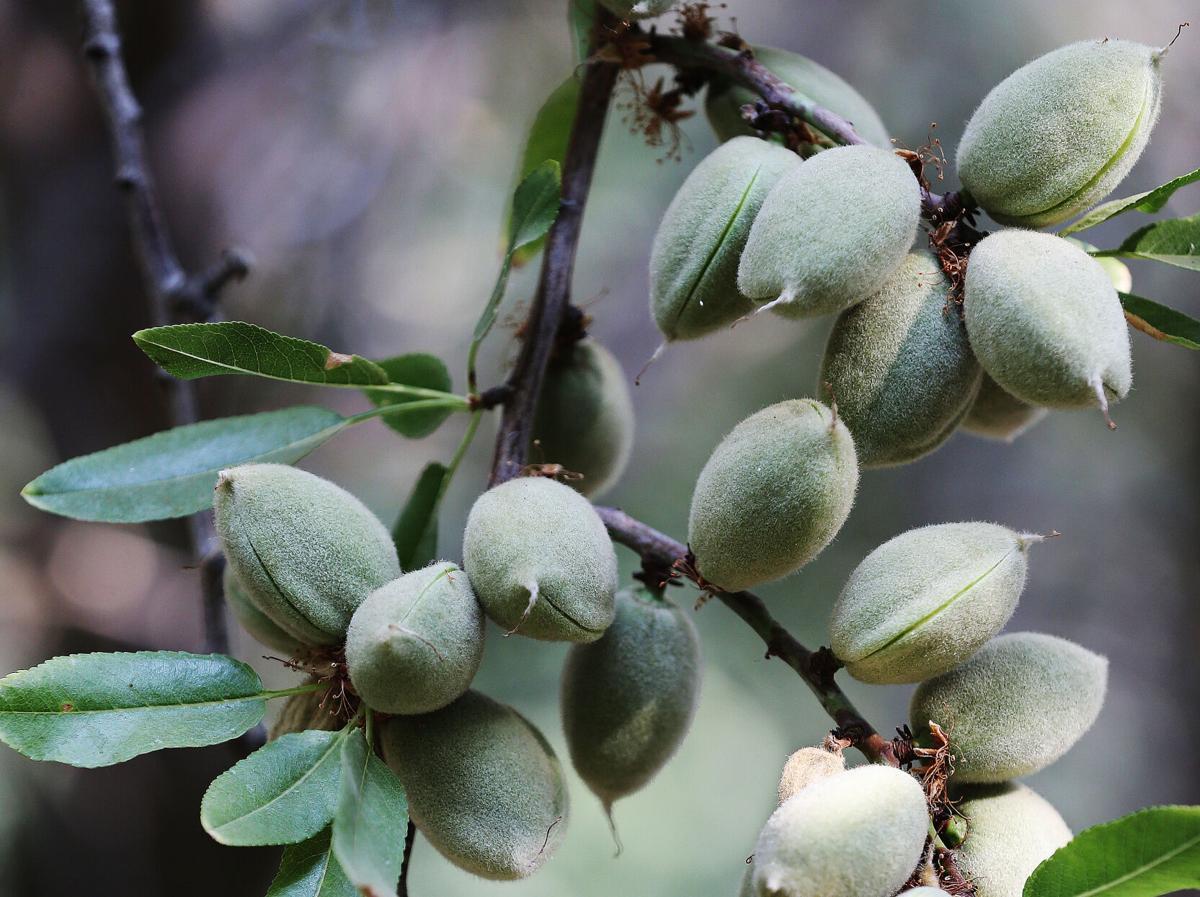 Almonds2.jpg