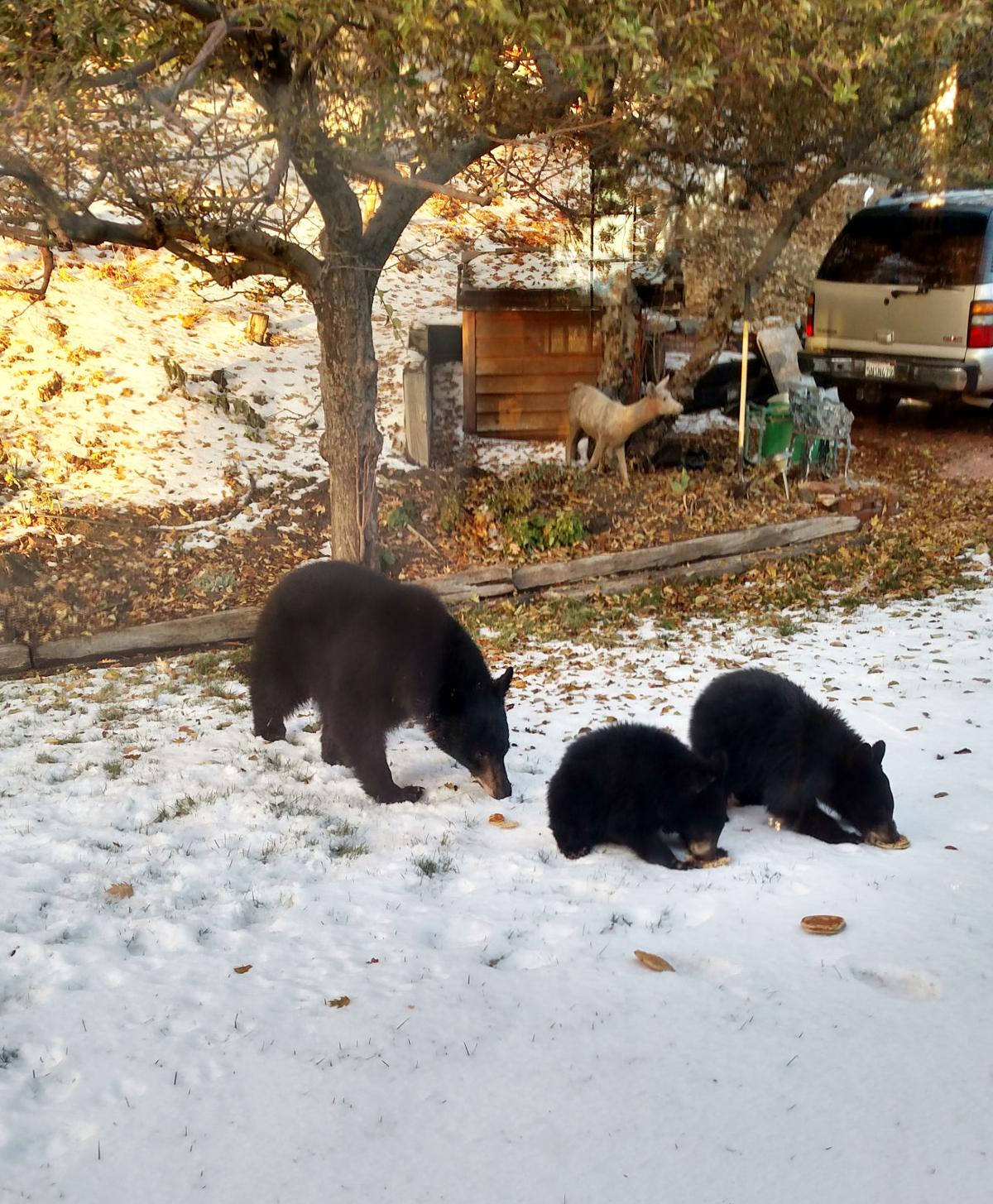 Pen in Hand #1519 - Black Bears 1.jpg