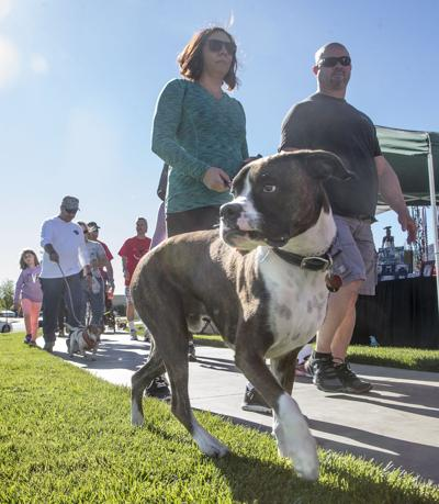 Gone To The Dogs 5k Fun Run Pet Festival Moves To