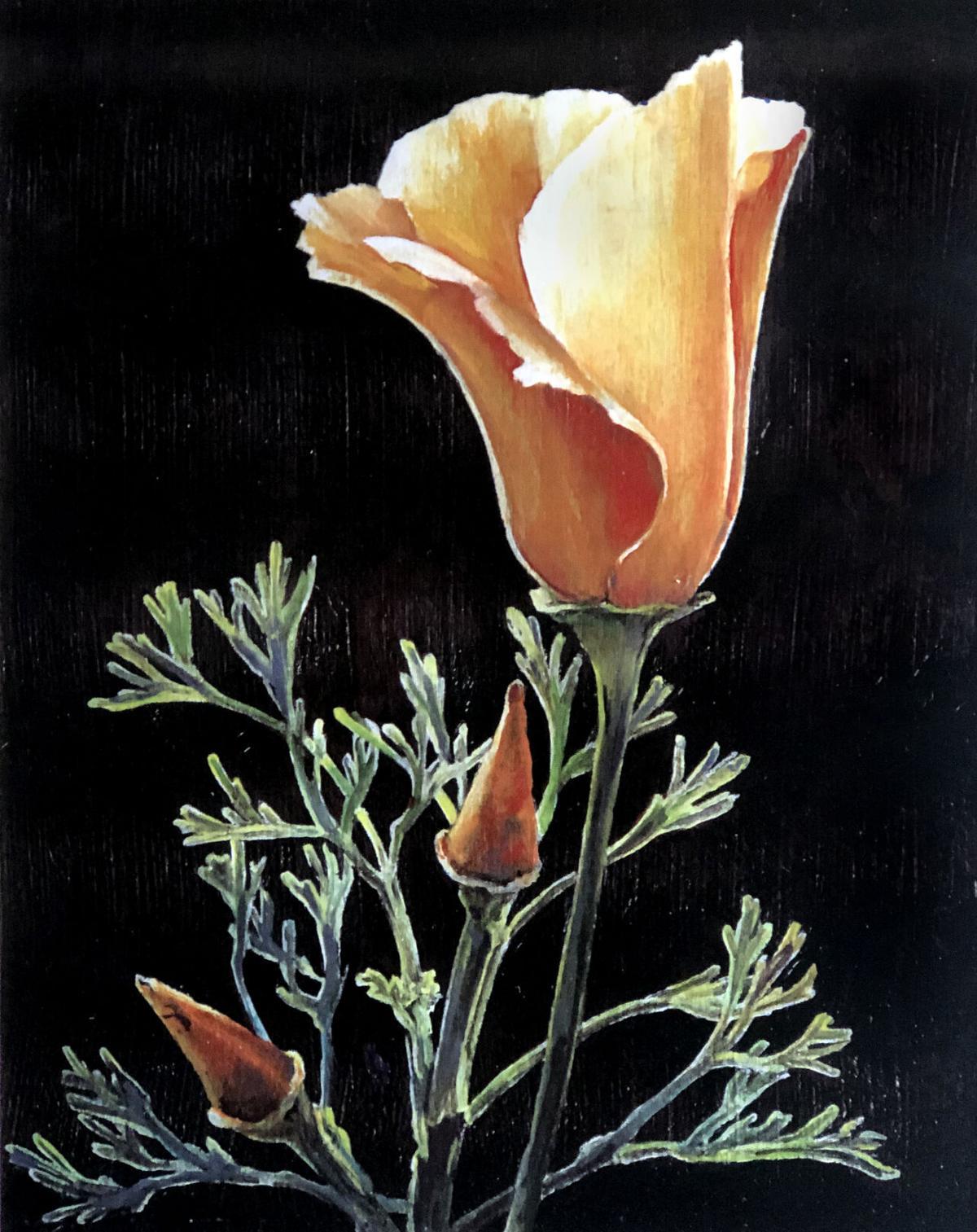 Pen in Hand #1725 - California Poppies 1.jpg