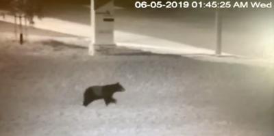 Bear visits AHTV