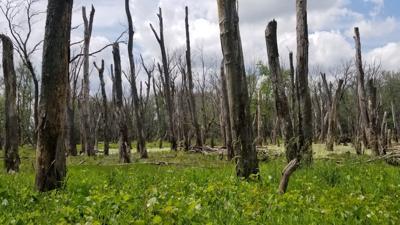 Public comments sought on habitat rehabilitation project on Mississippi River
