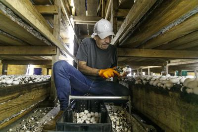 Farming labor shortage