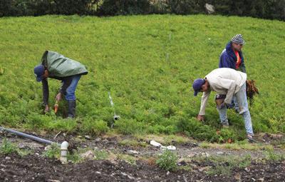 Amid fuel shortage, Venezuelan farmers worry about crops