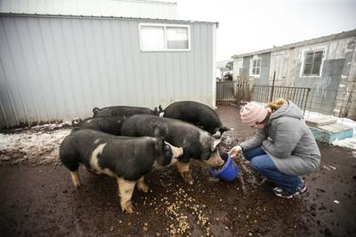 Young Hog Farmer