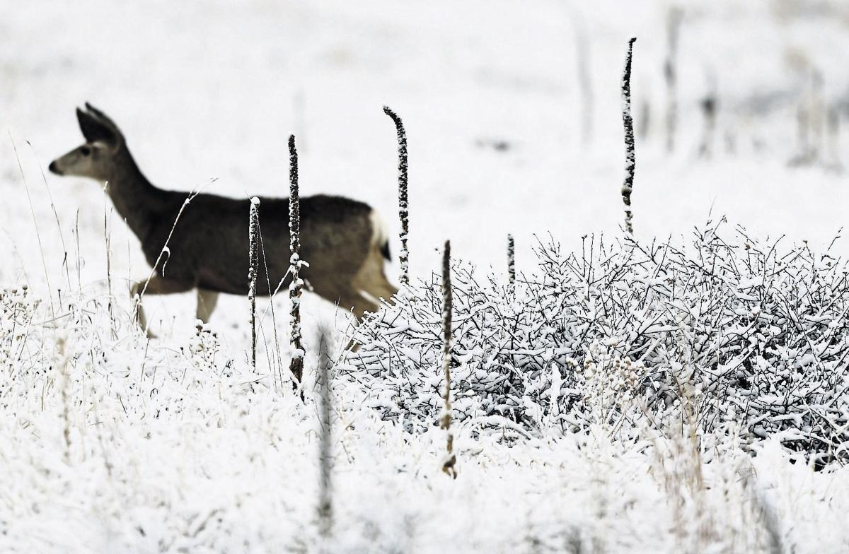 Tri-state outdoors notes: Wisconsin deer hunting season off