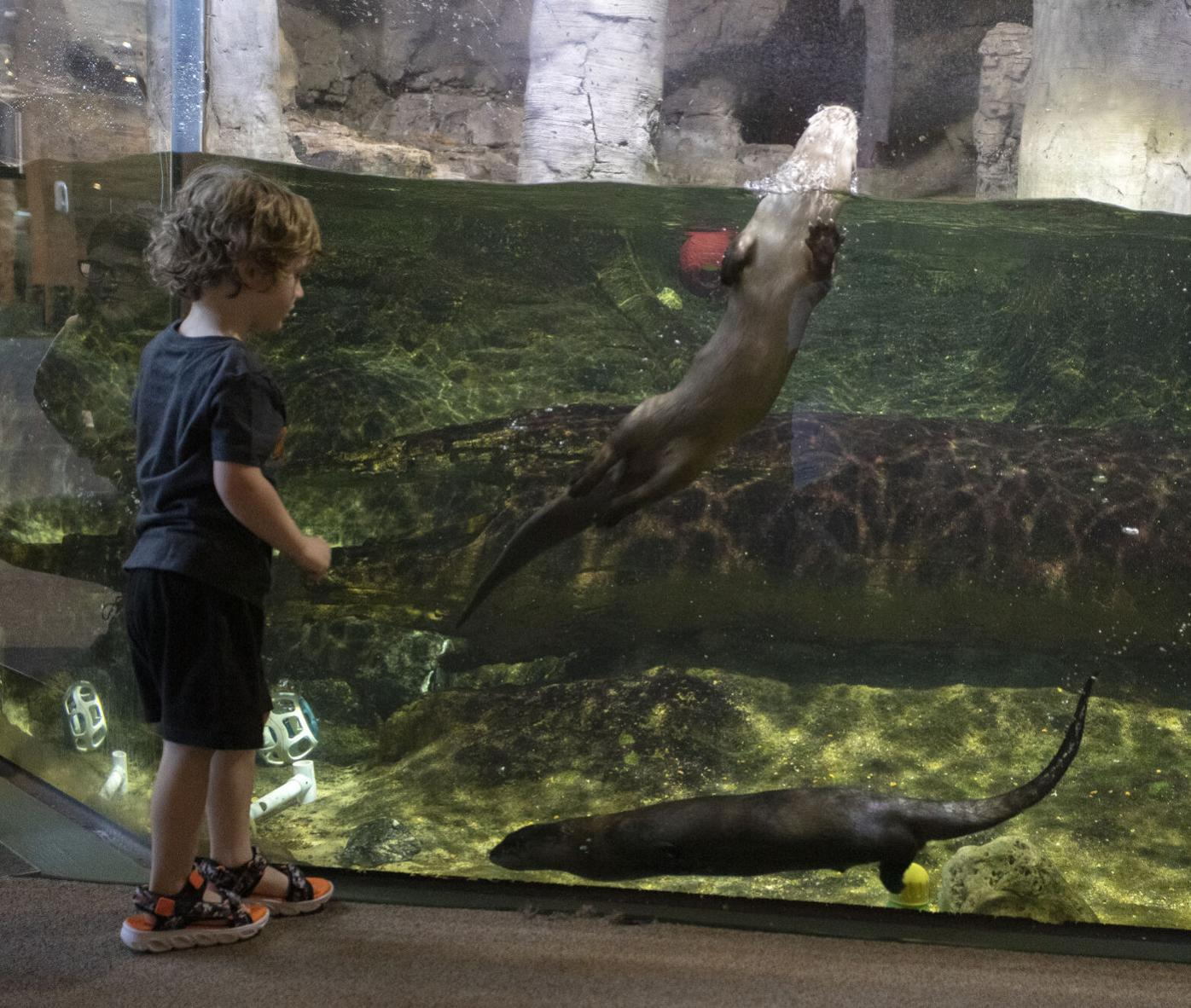 Otters At The River Museum